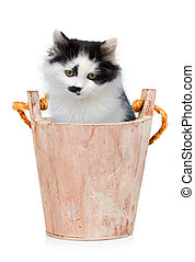 Kitten in wooden bucket on white background