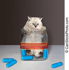 Kitten inside glass jar for pills 2
