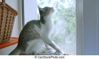 kitten is playing catching a fly on the window. kitten pet...