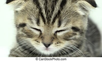 Kitten is sleeping in a white room. Close up - Kitten is...