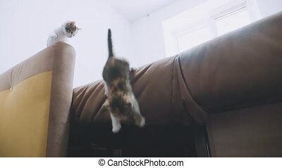kitten jumping falls from on the couch slow motion video....