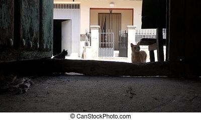 Kitten jumping in super slow motion, back light - Old wooden...