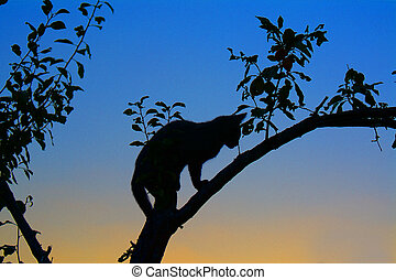 Kitten jumping on a trunk
