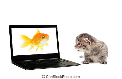 kitten, laptop and goldfish on a white background isolated