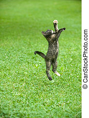 kitten leaping through the air