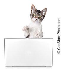 Kitten Listening to Music on Computer - Funny Kitten ...