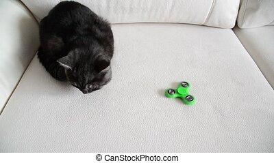 Kitten looks at moving spinner - The kitten looks at the...