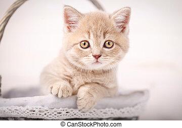Kitten looks from wicker basket.