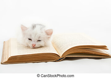 kitten lying on old book