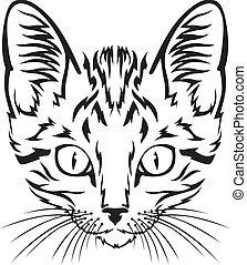 Kitten muzzle