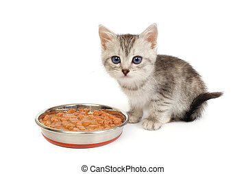 Kitten near a bowl with food isolated on white