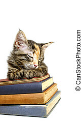 Kitten Old Books 3 - Kitten asleep on old books