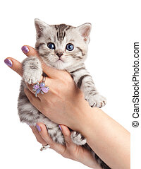 kitten on a white background. Adorable young cat in woman hands. cute little kitten sitting on the palm