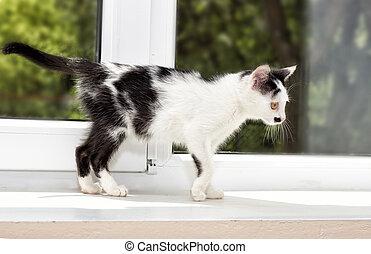 kitten on a window sill