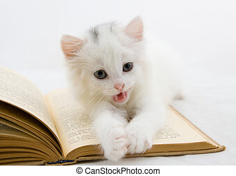 Kitten on book - Cute kitten moans on a thick book
