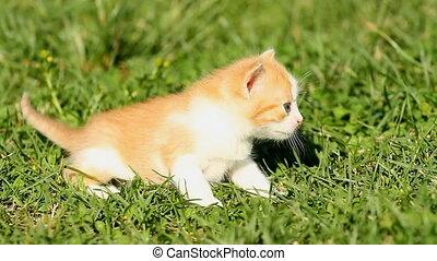 Kitten on the green grass