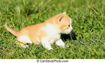 Kitten on grass - Kitten on the green grass