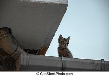 Kitten on the roof.