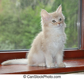 kitten on window sill