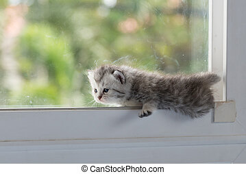 Kitten on window