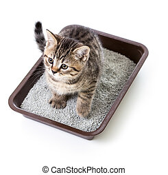 kitten or cat in toilet tray box with absorbent litter...