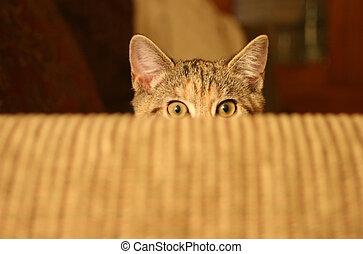 Kitten Peek - Kitten about to Pounce