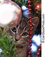 kitten peeking through tree - young grey tabby kitten ...