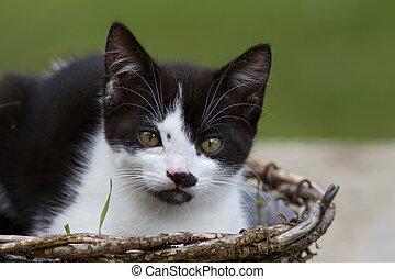 Kitten - kitten in agarden basket