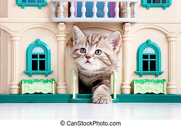 kitten playing in toy house