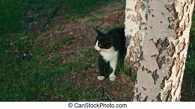 Kitten playing near a tree log. - Blurred Kitten playing...