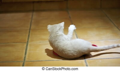 Kitten playing on the floor in the home. Slow Motion