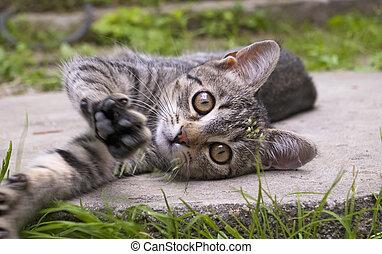 petite little kitten playing on the grass