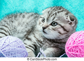 kitten playing with a ball of yarn