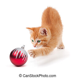 Kitten Playing with an Ornament - Cute orange kitten playing...
