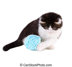 Kitten playing with blue ball