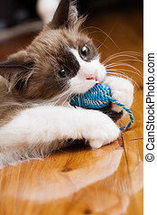 Kitten playing with chew toy