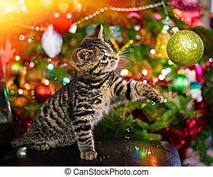 Kitten playing with Christmas decoration