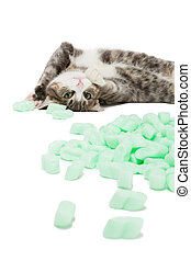 kitten playing with packaging chips