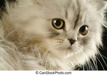 Kitten - Portrait of a kitten close-up in studio