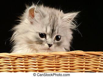Kitten - Portrait of a kitten in a basket in studio