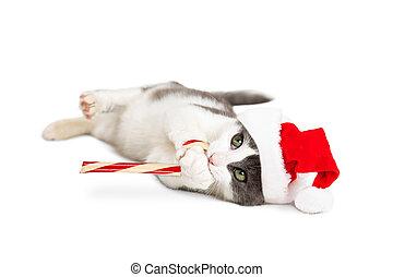 Kitten Santa Holding Candy Cane