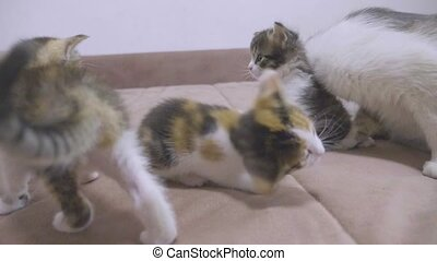 kitten shakes his head funny. the cat licks the tongue of a...