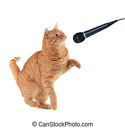 Kitten Singing - Kitten is Performing on the scene with a...