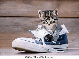 Kitten sitting in a shoe