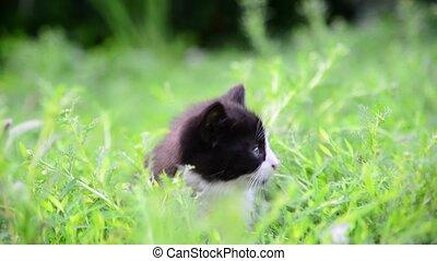 Kitten sitting in tall grass in summer