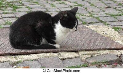 Kitten sitting in the yard
