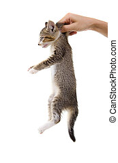 kitten sitting on a palm. isolated on white background