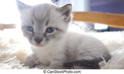 kitten sitting on fluffy blanket