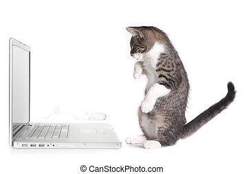 Kitten Sitting up Looking at Computer - Kitten Sitting up...