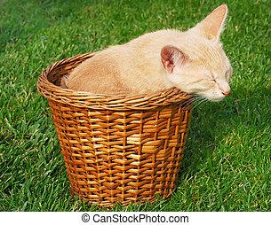Kitten sleeping in basket